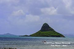 OAHU-HAWAII_1D50836-01 (Donna Molinari Photography) Tags: sanjose ca usa
