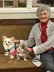 Fantastic little friends! (Philosopher Queen) Tags: friends visitors therapy pettherapy dogs chihuahuas animals rehab mom visit