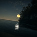 TheHunter: Call of the Wild / The Moon Shines Bright