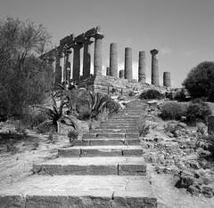 Juno in Agrigento (More Classical lines) (ADMurr) Tags: sicilia sicily italia italy templeofjuno dad575 agrigento greek rolleiflex kodak