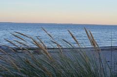 . (chamellow) Tags: ostsee urlaub strand rettin sunset sonnenuntergang couple couplepicture sea meer steg inspiration herbst sommer blues retten deutschland