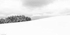 Minimal..... (mitch6778) Tags: neige snow hiver winter alsace montagne foret sapin froid bw blackandwhite