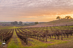 Winter Evening in the Vineyard (allentimothy1947) Tags: califonia henryroad landscape napacounty otherkeywords barn clouds earlyspring grass green hdr hills house pano trees vines vineyard vineyards