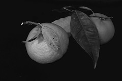"""Mandarinas--------------XT-BN (VALOR-BN1OOO) Tags: valorbn monocromo blanco y negro"""" tonal mono noire chroma sombras bw blackwhite photos blanconegro bn blackandwhite photodgv"""