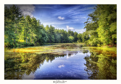 Afternoon Light (Pearce Levrais Photography) Tags: sunlight pond water lake lilipad forest tree outside outdoor nature sky reflection cloud canon hdr explore nh newhampshire trees gold