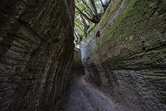 Via Cava Poggio Prisca (Cristiano Pelagracci) Tags: viecave etruscan street ancient roman maremma etruschi necropoli pitigliano sovana green nature forest