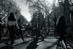 spring temperament@Kö-Graben, Düsseldorf (Amselchen) Tags: bnw blackandwhite mono monochrome city people pedestrians urban season spring light shadow streetphotography düsseldorf germany fujifilm fujinon fujifilmxt2 xf1855mmf284rlmois
