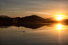 The duck (blatnik_michael) Tags: carinthia fuji sunset wörthersee lake spring sundown water duck austria xt20 landscape reflexions shadows pyramidenkogel