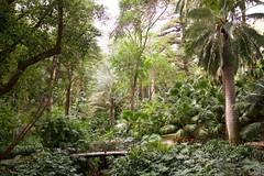 Jardín Botánico-Histórico, Málaga, Spain (AperturePaul) Tags: málaga spain europe nikon d600 garden plants botanical nature tree trees tropical palm andalusia jardín botánicohistórico concepción