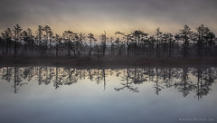 Reflection of the bog (Andrei Reinol) Tags: bog wetland marsh tree trees morning sunrise early sky clouds fog mist light water reflection estonia nature travel outdoors adventure landscape estonianlandscape eesti baltic balticlandscape atmosphere
