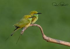 750_0746s (TARIQ HAMEED SULEMANI) Tags: sulemani tariq tourism trekking tariqhameedsulemani winter wildlife wild birds nature nikon