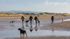 Sunday afternoon (RCB4J) Tags: ayrshire ayrshirecoast babygrace clydecoast firthofclyde irvinebeach jakob rcb4j ronniebarron scotland siameselurcher sony18250mmf3563dtaf sonyslta77v trailhound art bordercollie dobermanterrier dogs labradors photography retrievers shoragundogs spaniels