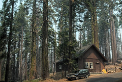 Cabin in the woods (Kasimir) Tags: california yosemite nature woods cabin trees sequoia park cabaña
