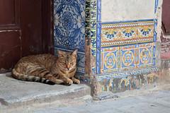Cat & Tile (peterkelly) Tags: digital canon 6d northamerica cuba caribbean gadventures cubalibre havana oldhavana cat step doorway door tile street blue orange