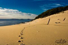 Footprints Carlo Sand Blow (Theo Crazzolara) Tags: carlo sand blow carlosandblow footprints foot prints path walking hiking great sandy nationalpark nature natural rainbow beach australia queensland