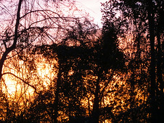 Trees During Sunset. (dccradio) Tags: lumberton nc northcarolina robesoncounty outdoor outdoors outside nature natural sunset evening eveningsky february winter goodevening saturday saturdaynight saturdayevening canon powershot elph 520hs tree trees treebranch treebranches branch branches treelimb treelimbs beauty scenic woods forest wooded settingsun eveningcolors daylightends eveningbegins silhouette