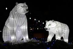 Polar Bear Lanterns (sgnelson2) Tags: chinese bear lantern festival park zoo tucson arizona