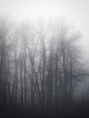 Ghost Trees (Ray Mines Photography) Tags: montana ghost fog cold winter rural desolate barren trees dead