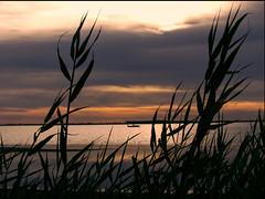 Pêcheur (doumé piazzolli) Tags: pêcheur marseillan thau bateau sunrise fz200 panasonic étang levéedusoleil roseau nuage water ombre reflet embarcation cloud contrejour shadow reflection vegetation lagune bassindethau