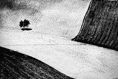 (Effe.Effe) Tags: bn bw biancoenero blackandwhite tree field country albero campagna campi solchi furrows