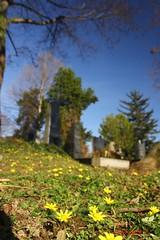IMG_8354 (Pfluegl) Tags: wien vienna zentralfriedhof graveyard europe eu europa österreich austria chpfluegl chpflügl christian pflügl pfluegl spring frühling simmering