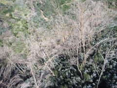 IMG_8055 (wallygrom) Tags: madeira funchal monte botanicalgarden jardimbotânicodamadeira cablecar teleferico