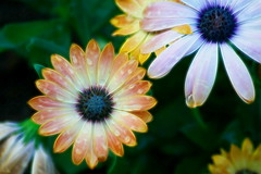 Fractalius - III (endresárvári) Tags: flower flowers garden hungary budapest nature canon colorful fractalius spring summer