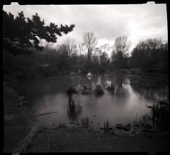 LewisKy_UrbanWaderAtStaveHillPondPW (kycamlewis) Tags: stavehillpond southlondon pond water pinhole zero612b reeds ecology birdboxes nature slowphotography kylewis blackandwhite naturereserve