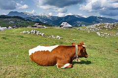 19-Velika Planina-020 (Frank Lenhardt) Tags: slovenien slovenia