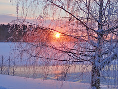 Sunset through birch (PeepeT) Tags: nokia pitkäniemi talvi winter snow lumi auringonlasku sunset tammikuu january koivu birch