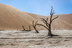 _RJS4653 (rjsnyc2) Tags: 2019 africa d850 desert dunes landscape namibia nikon outdoors photography remoteyear richardsilver richardsilverphoto safari sand sanddune travel travelphotographer animal camping nature tent trees wildlife