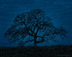 06•52 • 2019 • Blue Oak (Doug Churchill) Tags: sonyrx100m6 52 52weeks 52weeksthe2019edition bidwell bidwellpark california citypark