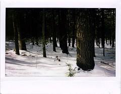 (babireley) Tags: fujifilminstaxwide instaxwide300 instantfilm tiogacounty pa pawilds winter snow