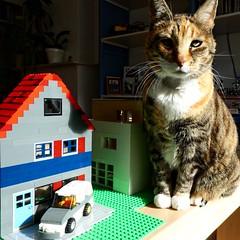 Big cat in town (sander_sloots) Tags: cat lego kat poes europese korthaar house huis animal huisdier pet toy speelgoed spelen play town stad panasonic dctz90 lumix