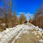Horse and rider on a hiking path along the river Inn near Oberaudorf, Bavaria, Germany thumbnail