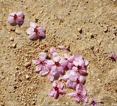#12temas..52imagenes..#desde.. arriba....la primavera se acaba (jmontem) Tags: desde 12temas