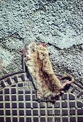 Rat plapla (herbdolphy) Tags: analog analogique argentique pellicule 35mm rat dead pentaxmx pentax fuji c200 filmisnotdead film filmphotography