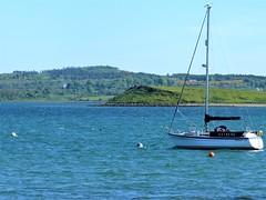 Choppy waters on Strangford Lough (ronmcbride66) Tags: yacht lough strangfordlough atanchor choppywater ardspeninsula gorse woodland scrub codown