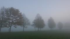 Nebel Bäume (Aah-Yeah) Tags: nebel bodennebel misty foggy fog mist bäume grassau achental chiemgau bayern