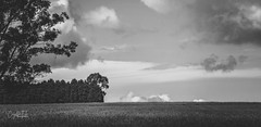 Fluffy clouds over the horizon (Riley-Dobe) Tags: hills trees clouds farm fields grass bw d500 70200 rural sky horizon australia nikon