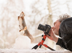 Red squirrel standing on skis and man with a camera (Geert Weggen) Tags: squirrel camera red animal backgrounds bright cheerful close color concepts conservation culinary cute damage day earth environment environmental equipment love valentine photo winter snow openmouth ski sport wintersport man person human photographer bispgården jämtland sweden geert weggen hardeko ragunda