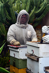DSC_9755-61 (jjldickinson) Tags: nikond3300 107d3300 nikon1855mmf3556gvriiafsdxnikkor promaster52mmdigitalhdprotectionfilter longbeach bixbyknolls longbeachbeekeepers outreach class beeprepared insect bee honeybee apismellifera hive hiveinspection dickbarnes