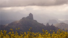 Ben Tiger (by Andy) Tags: bentaiga berg mountain 2019 grancanaria roque pm2 45mm olympuspen canaria