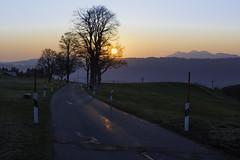 Sunrise Avenue / Allgäu hills (I'm gonna come back to walk these streets again) (sigi-sunshine) Tags: wanderung wandern outdoor bergwelt reute knottenried landstrase sunrise sonnenaufgang allgäu strase berge mountains sonne road countryroad germany deutschland nikon