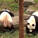 Bei Bei (You still there Larry? Sorry, I shoulda warned ya I was gonna switch sides.) 2019-04-13 at 13.27.08 & 13.28.13 PM