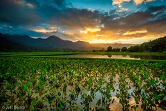 Kalo Loí – Hawaiian Taro Fields of Hanalei Kauai (Jeff Bentz Photography) Tags: kaloloi tarofields orange princeville godrays sunrays reflection hawaii kauai sunset hanalei taro