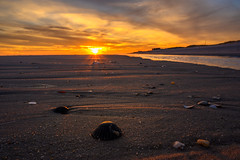 A Shell's View (djrocks66) Tags: sunset sunsets oceanscape oceanscapes waterscape waterscapes nature outdoors beach ocean waves seagulls fishing color sky clouds sand clams shells stones dunes shore sea seashore boating nikon z6 pink orange sun landscapes