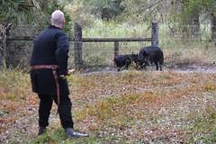 EEF_7686 (efusco) Tags: boar medieval spear brambleschoolearteofthehunt bramble schoole military arts academy florida ferel hog pig