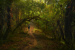The gateway .. (tchakladerphotography) Tags: light landscape forest foggy misty mood travel trees road path green nepal naturallight nikon himalaya