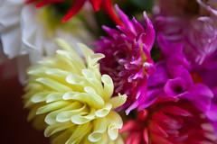 20100731_highlandsflowers_037 (West_Freeman) Tags: 2010 color dalia digital flowers horizontal july nature northamerica outdoor usa unitedstatesofamerica photography